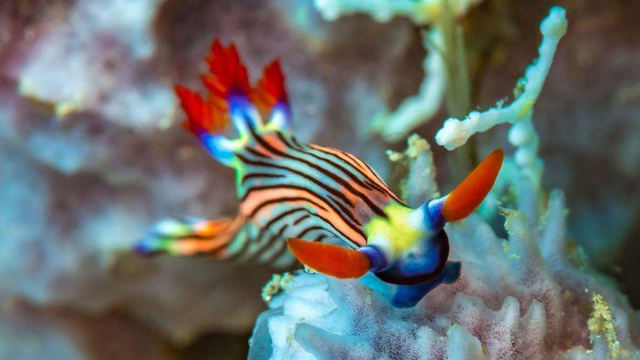Scuba Diving Kenya nudibranch