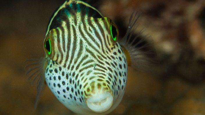 Scuba diving Kenya