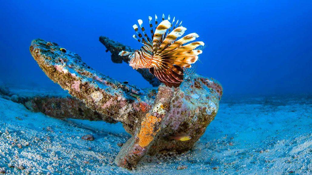 Scuba Diving Kenya Wreck