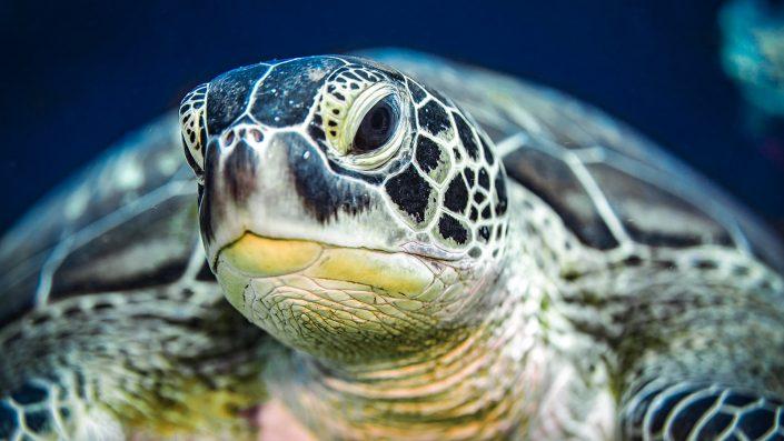 Kenya Scuba Diving Turtles