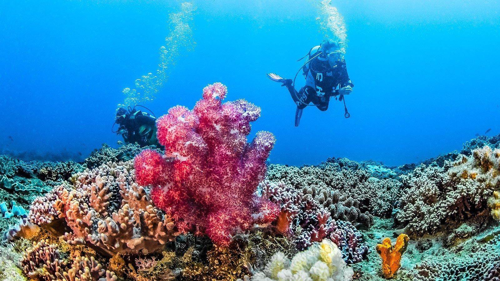 Scuba diving Kenya coral