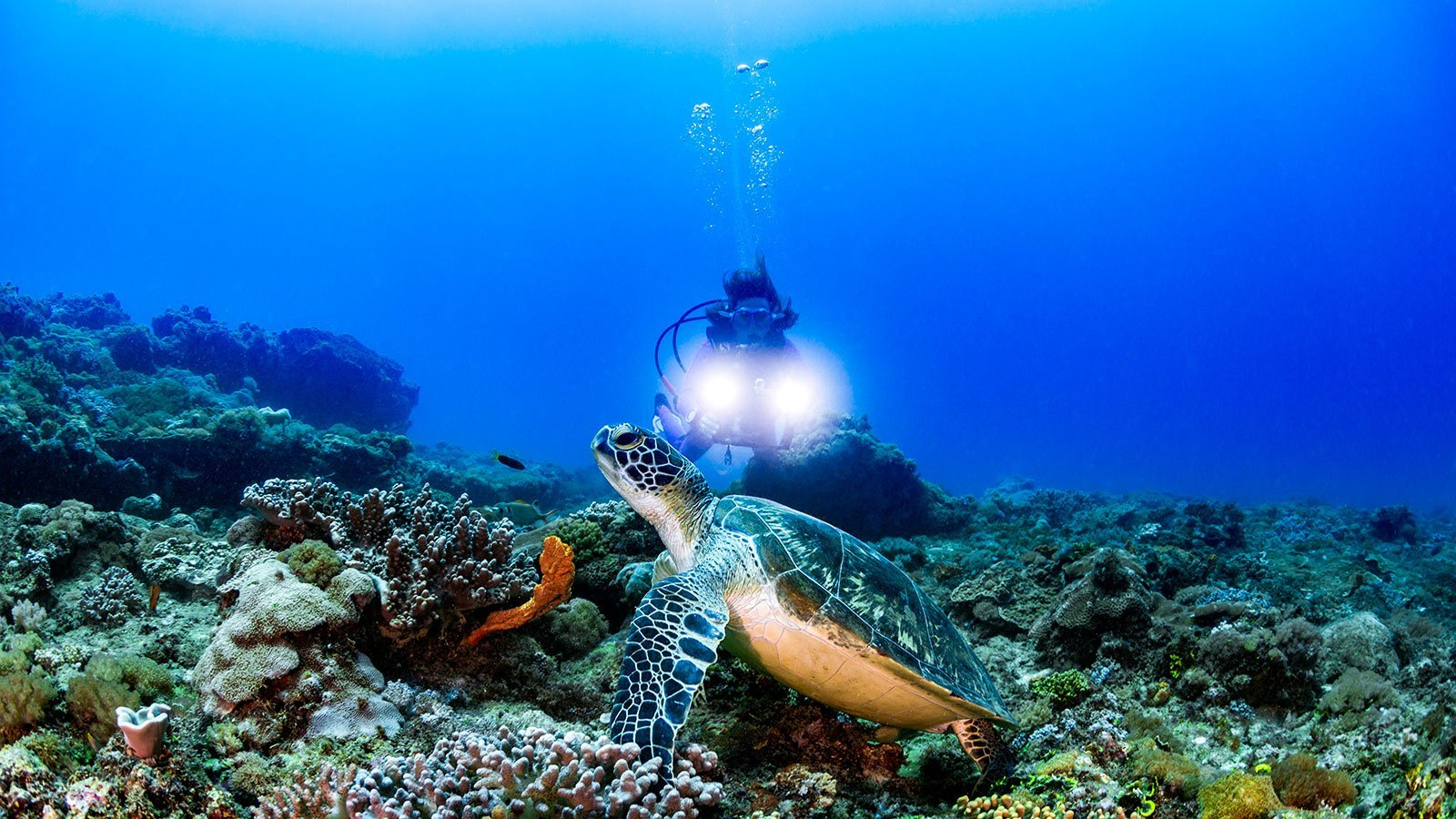 Scuba diving Kenya turtle