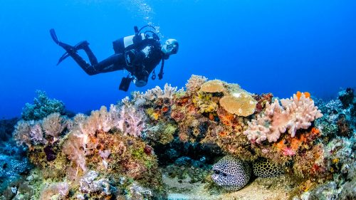 Scuba diving Kenya Moray eel