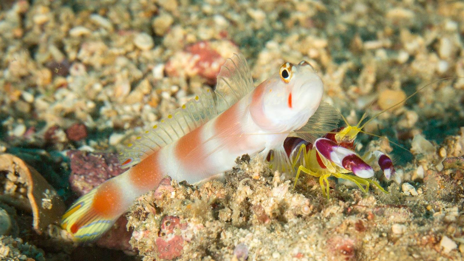 Scuba Diving Kenya - Diani Beach - Diving the Crab