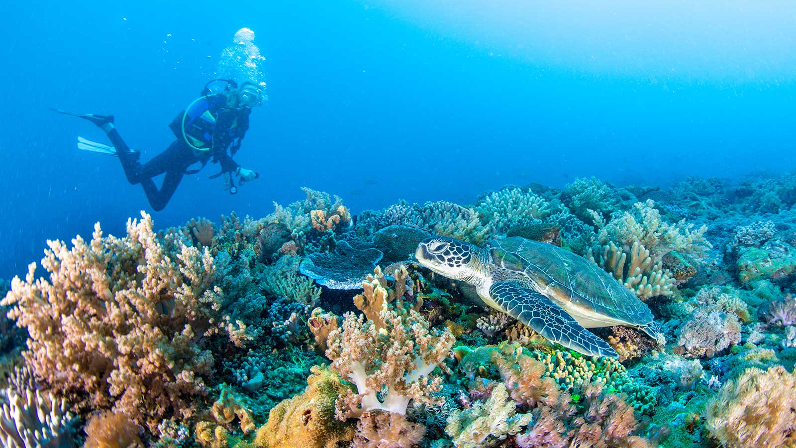 Scuba Diving Diani Beach Kenya